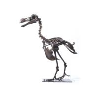 73 • Bronze Skeleton of a Dodo