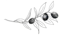 Olive Branch by Olivia Hoare