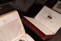 Close up of spider silk books on display at The Natural World exhibition, Oliver Hoare Ltd